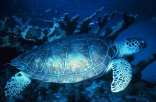 25 espacios protegidos y 82 especies en peligro por las prospecciones en Canarias