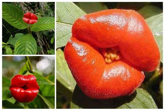 15 Flores Muy Especiales