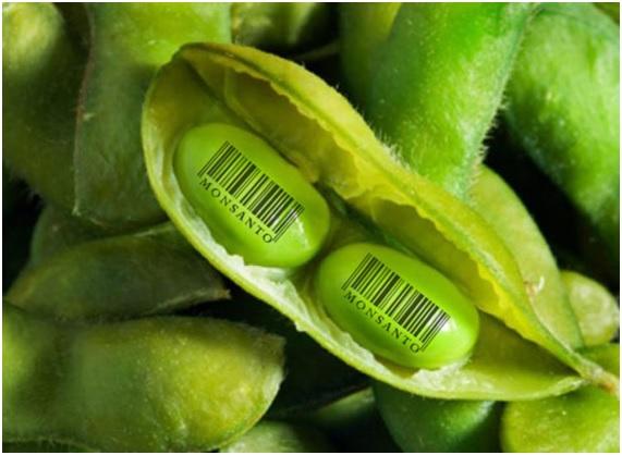 ENFER11 43 original - 10 enfermedades provocadas por el glifosato. 17 países han prohibido o restringido el uso de este herbicida carcinógeno.