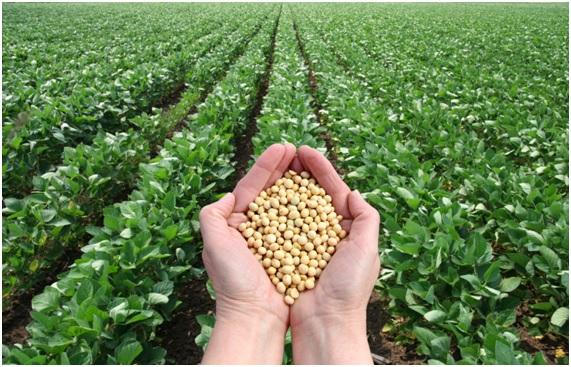 ENFER14 90 original - 10 enfermedades provocadas por el glifosato. 17 países han prohibido o restringido el uso de este herbicida carcinógeno.