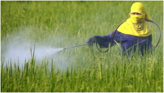 ENFER17 54 original - 10 enfermedades provocadas por el glifosato. 17 países han prohibido o restringido el uso de este herbicida carcinógeno.