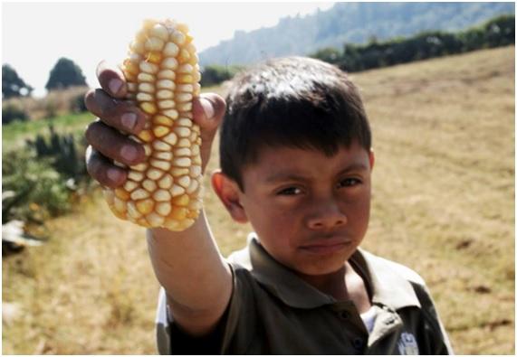 ENFER24 43 original - 10 enfermedades provocadas por el glifosato. 17 países han prohibido o restringido el uso de este herbicida carcinógeno.