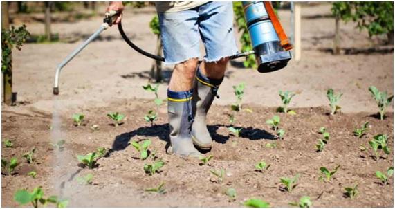 ENFER26 71 original - 10 enfermedades provocadas por el glifosato. 17 países han prohibido o restringido el uso de este herbicida carcinógeno.