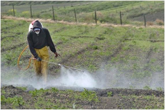 ENFER30 63 original - 10 enfermedades provocadas por el glifosato. 17 países han prohibido o restringido el uso de este herbicida carcinógeno.