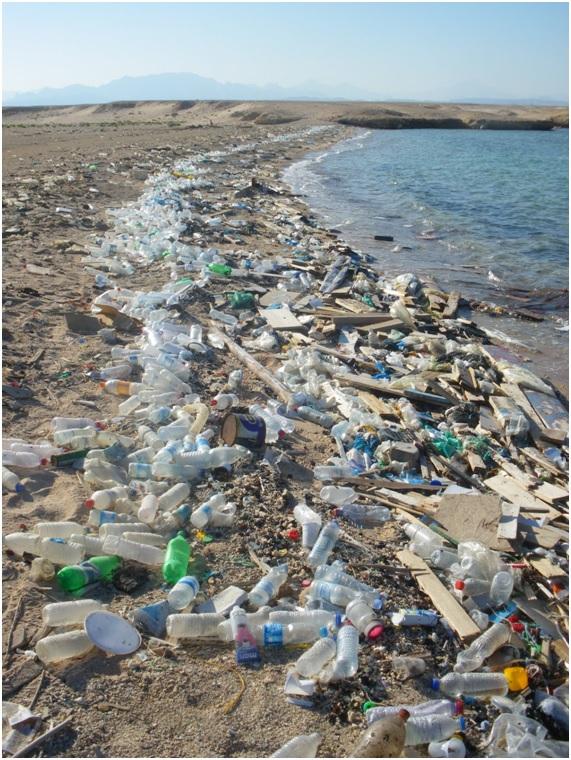 Resultado de imagen para fotos ambiente contaminado