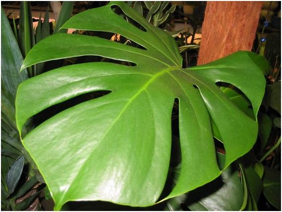 10 plantas de interior potencialmente peligrosas for Plantas de interior precios