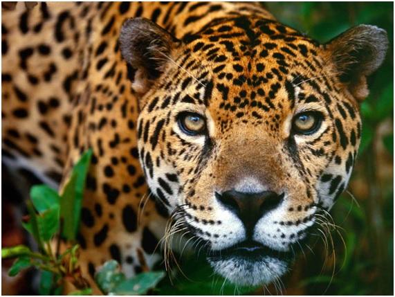 Resultado de imagen de biodiversidad muy alta EN VENEZUELA