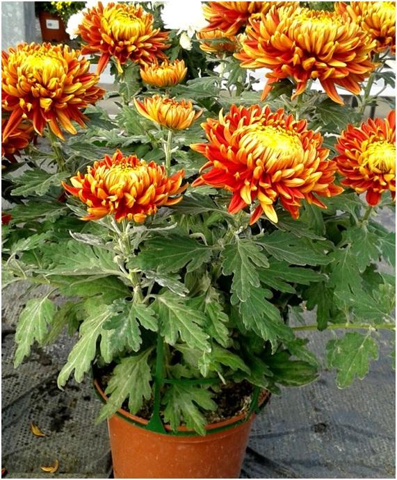 10 plantas de interior que purifican el aire del hogar - Plantas de interior que purifican el aire ...