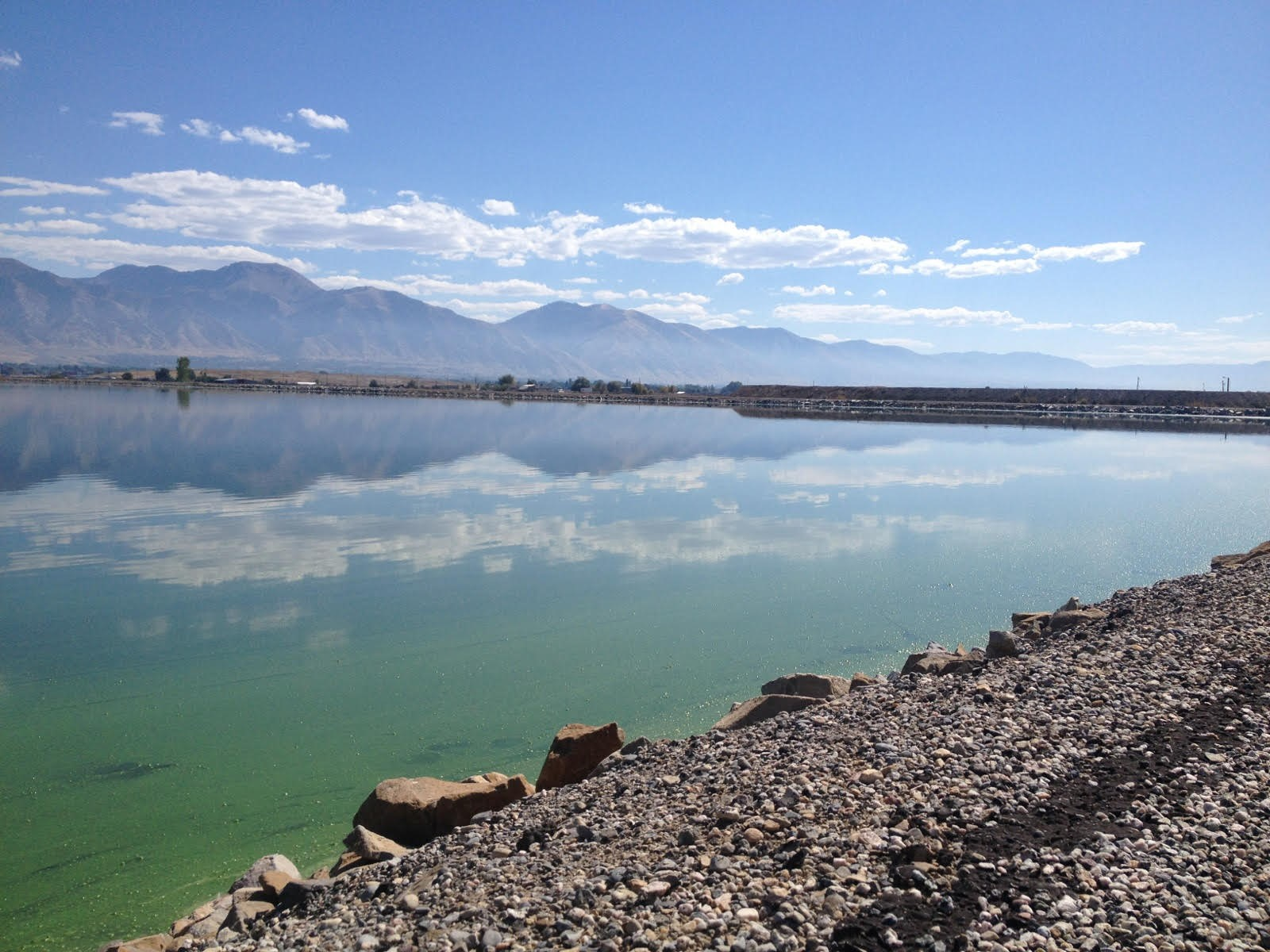Innovadora aplicaci n de microalgas para recuperar el agua for Recuperar agua piscina verde