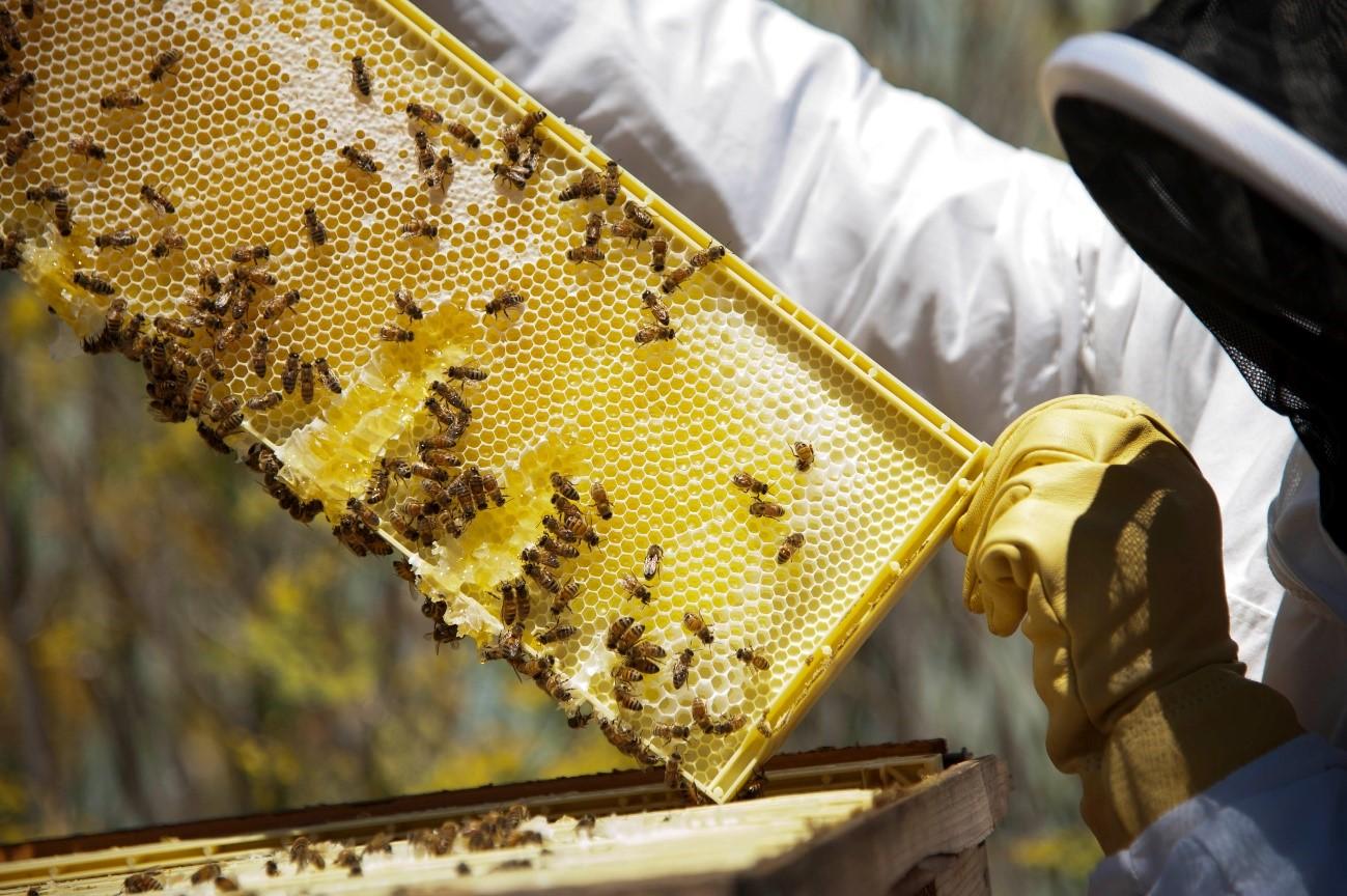 Tecnologías Verdes que salvan abejas y suelos