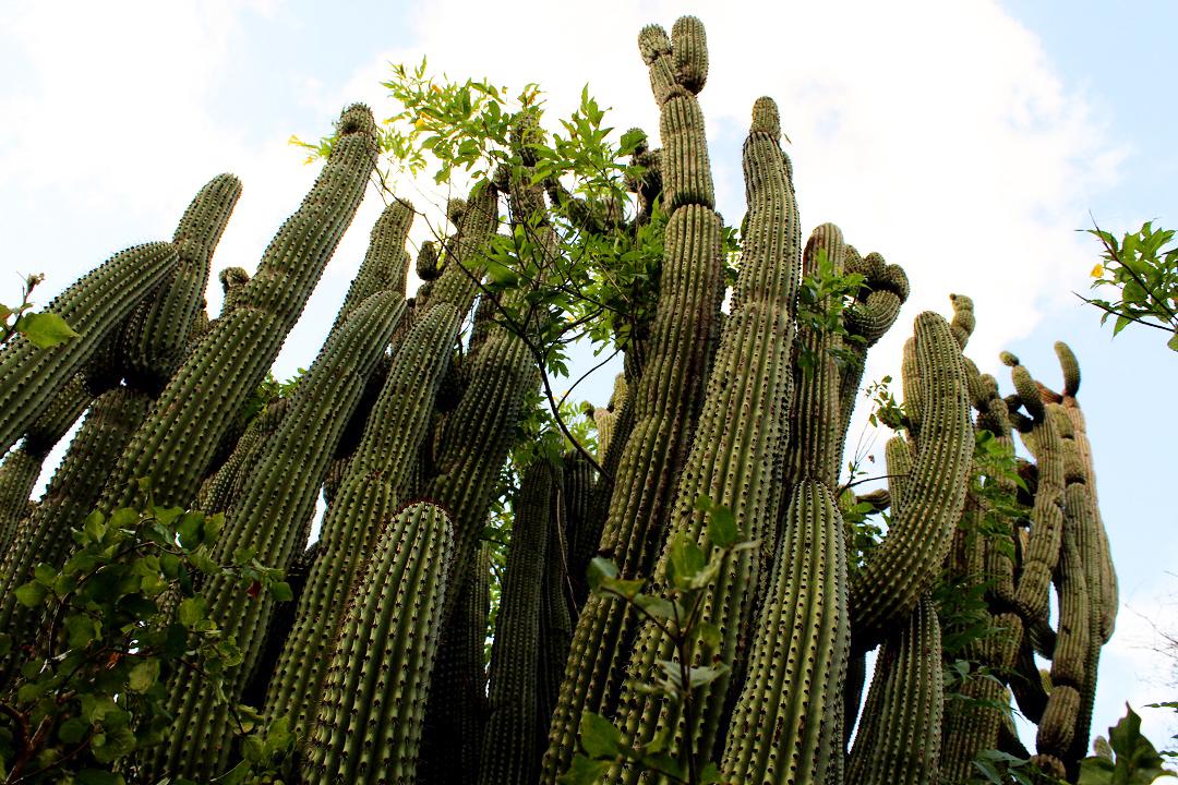 México. Rehabilitan Santuario de los Cactus en Baja California Sur