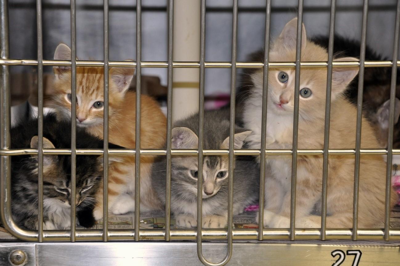 Casas de acogida de animales en Madrid