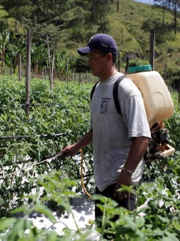 La letal omnipresencia de los plaguicidas en México
