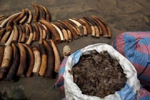Reino Unido contra la caza furtiva de elefantes