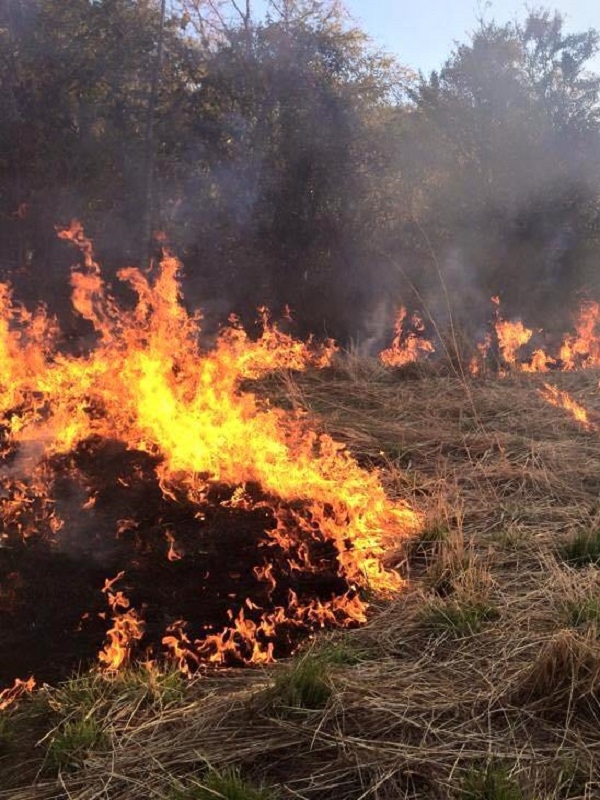 El Congreso pide al Gobierno una estrategia nacional de incendios erradicar la cortadera y los platos de plástico