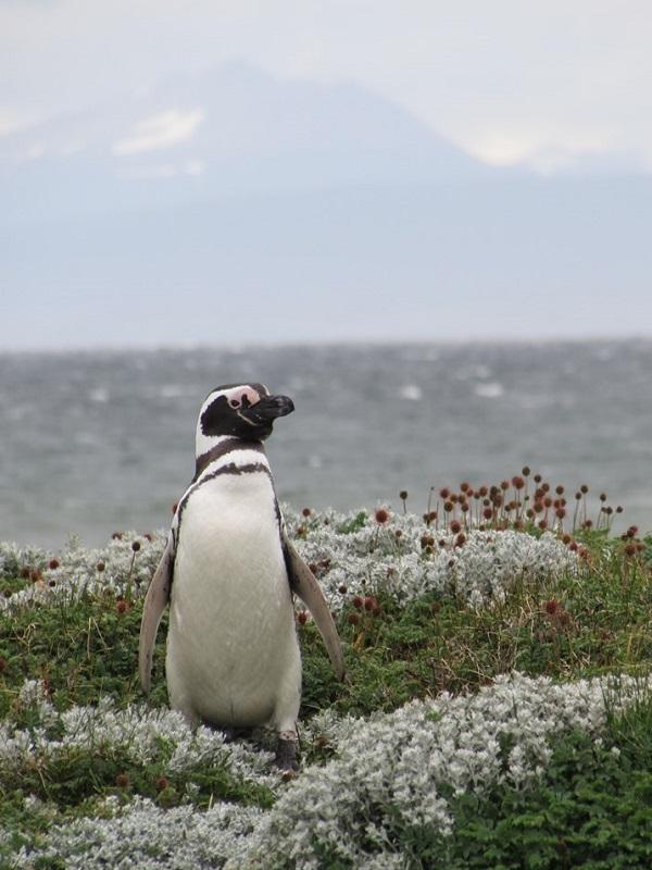 Chile está embargando el futuro de uno de los ecosistemas más importantes del mundo