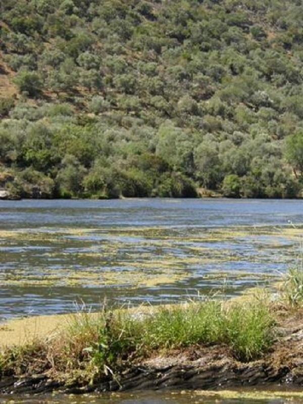 La CH del Tajo da por superada la sequía