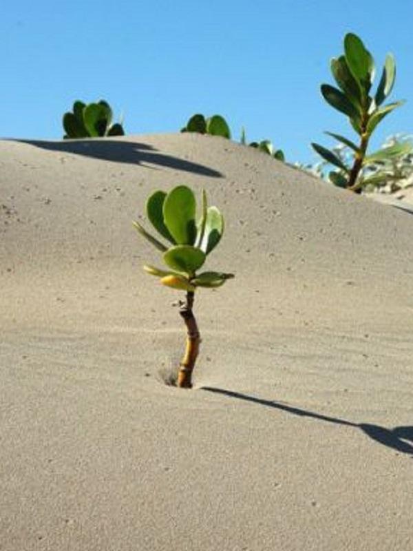 Una inmensa Muralla Verde para contener el Sáhara