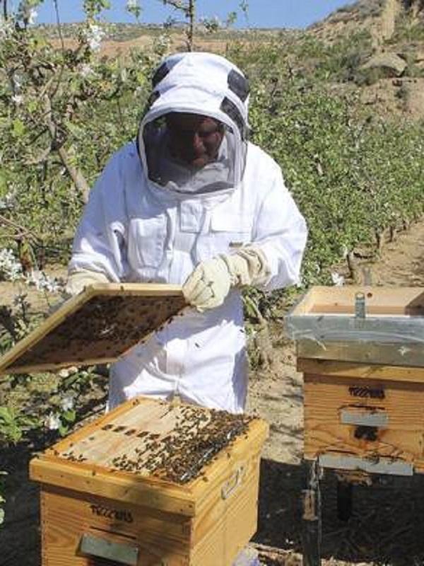 Aragón incrementa las ayudas a la apicultura y a la agricultura ecológica