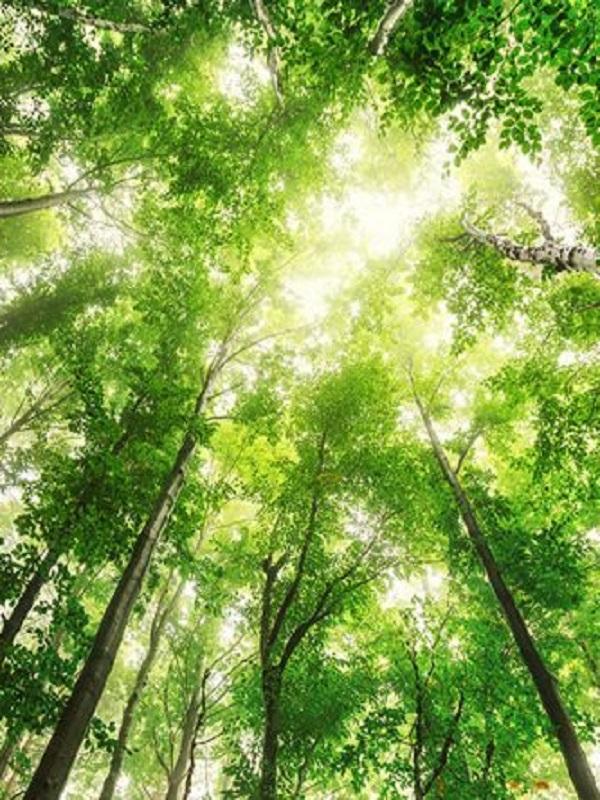 El CSIC confirma que las áreas protegidas frena la expansión constructora en la naturaleza