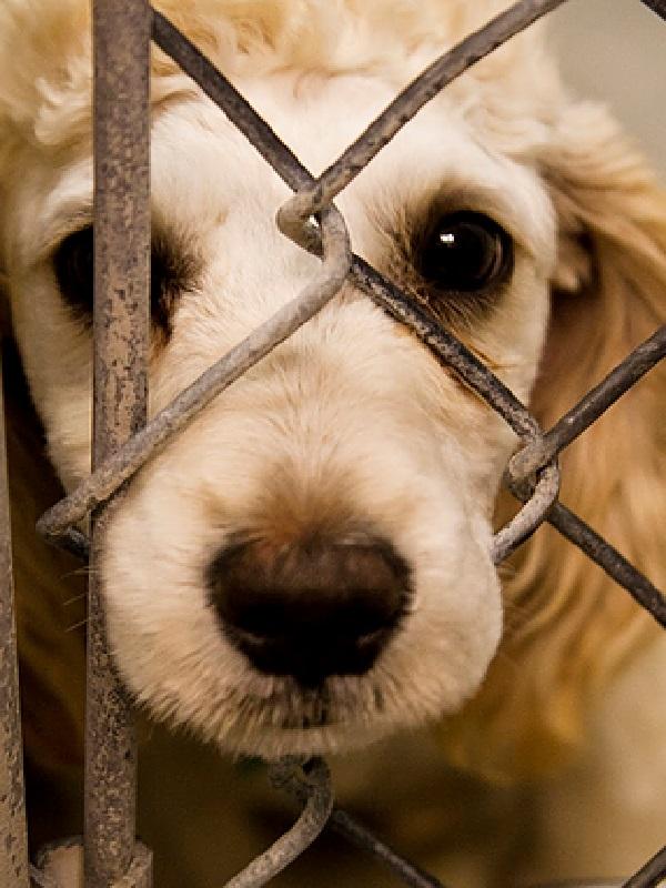 Lamentable, localizan en Punta Umbría a un perro agonizando atrapado en un cepo