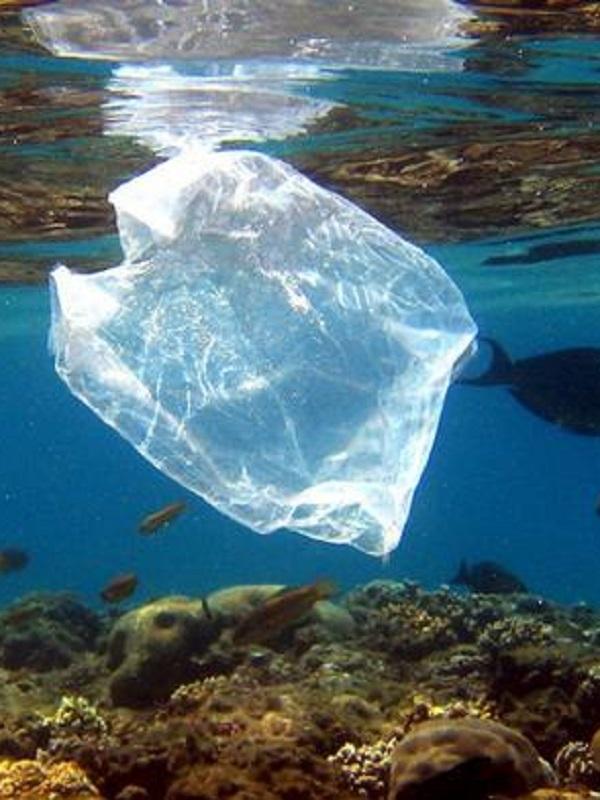 Dibujan en una playa de Cádiz una gigantesca tortuga para denunciar la contaminación por plásticos en océanos