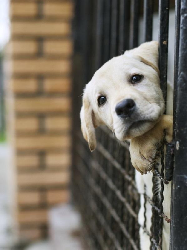 Adopción de animales mediante el uso de la tecnología