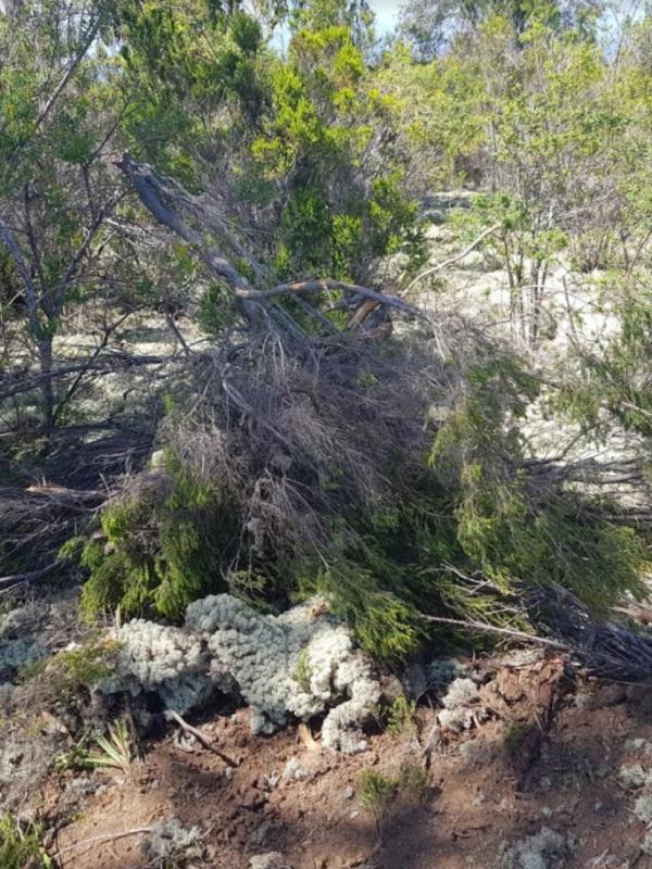 Movimientos de tierras en suelo rústico protegido en Lomos de Riquiánez