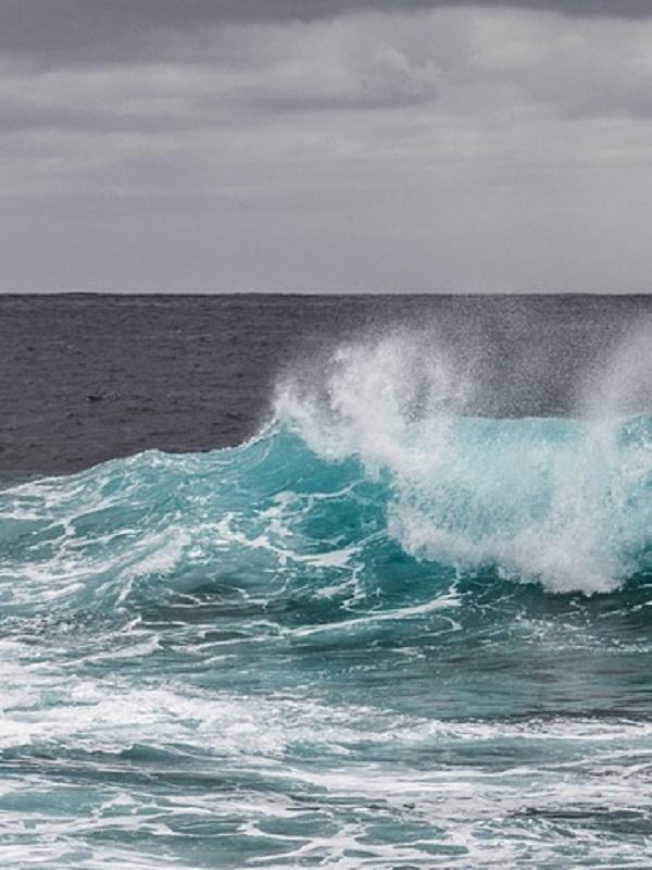 Life Ip Intemares, el mayor proyecto de conservación del medio marino en Europa