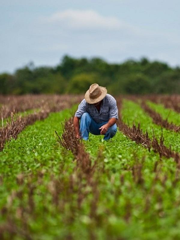 Científicos de México y Reino Unido optimizarán agricultura de riego