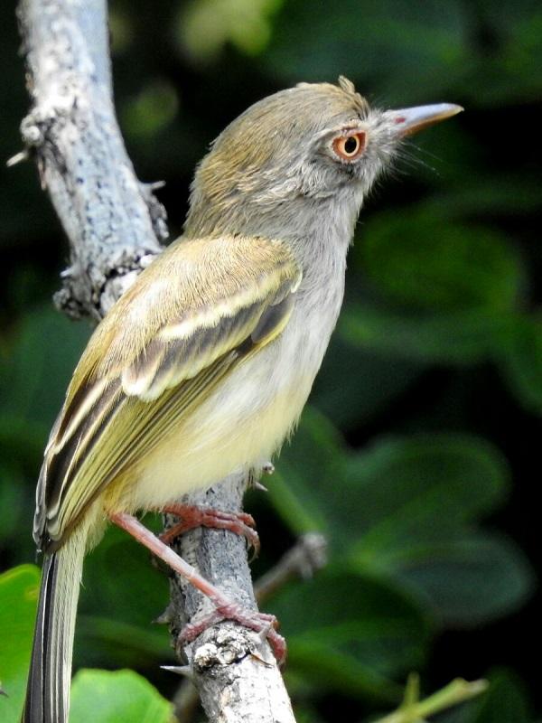 eBird, millones de registros de aves en todo el Planeta