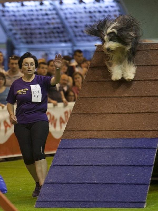 La Asociación Madrileña de Veterinarios de Animales de Compañía en 100x100 Mascota