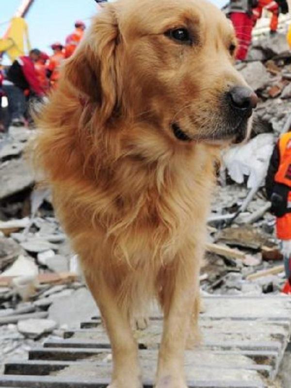 ¿Pueden los animales predecir terremotos?