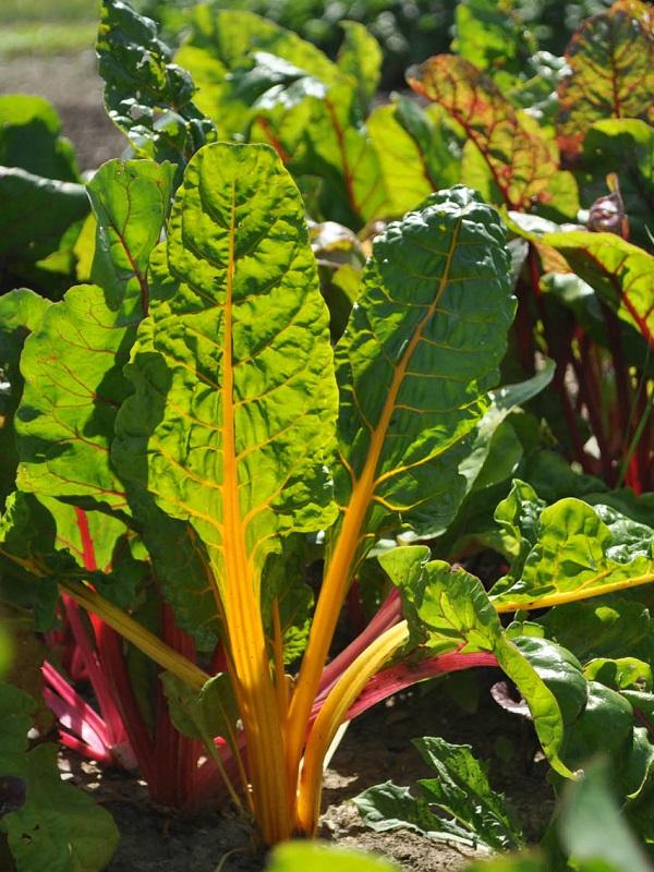 Europa quiere una reconversión ecológica en la producción de alimentos