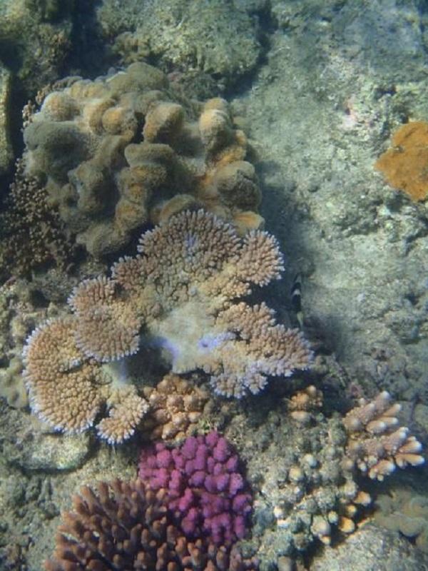 Gran Barrera de Coral, ¿quién te ha visto y quién te ve?