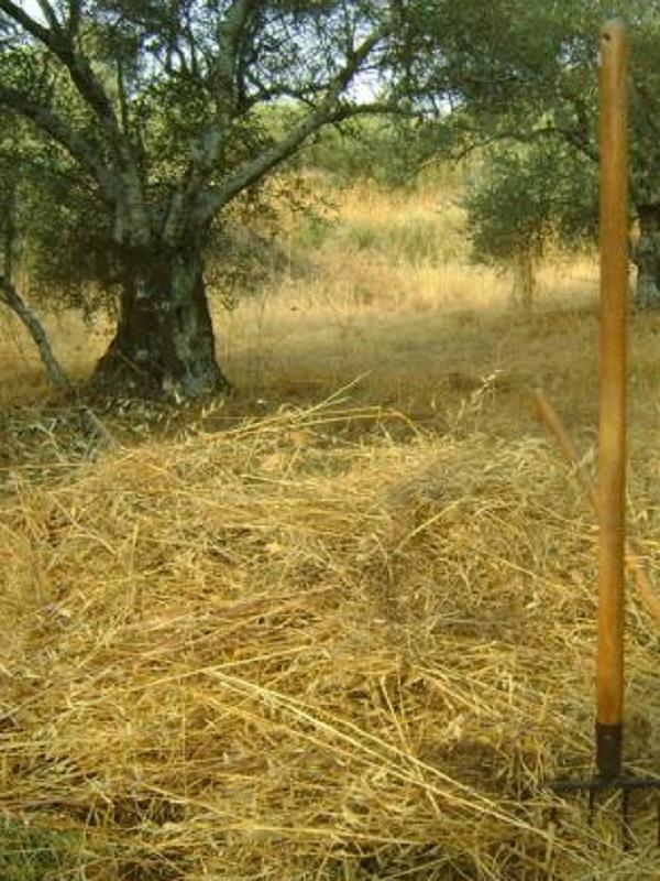 La tremenda importancia y consecuencias de la gestión de las siegas de heno