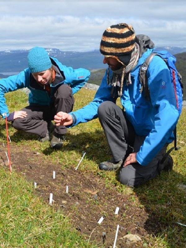 Plantas invasoras resistentes a los ambientes fríos: estudio realizado en Chile y Suecia es premiado en Estados Unidos
