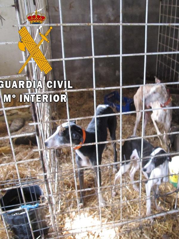 Maltrato animal en una finca de Fuerteventura