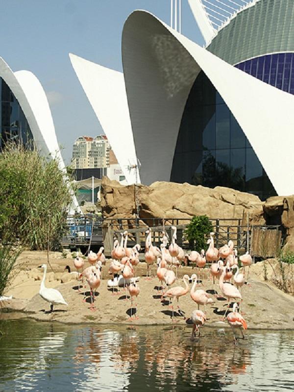 Ecoembes y el Oceanográfic firman un convenio para los residuos de los visitantes