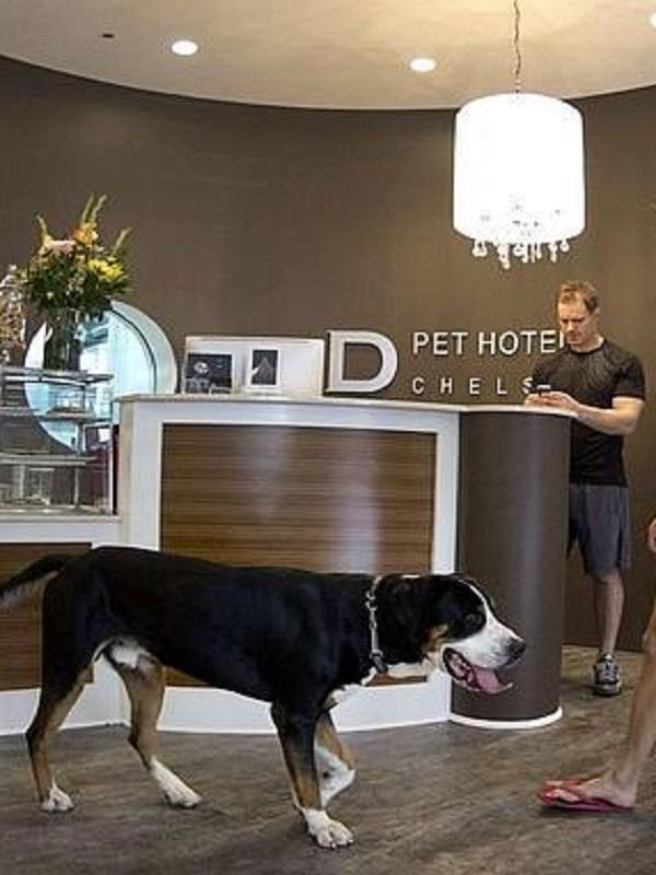 Casual Hoteles hospedó a más de 1.200 mascotas en 2017