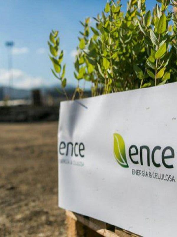 Ence inicia la construcción de la planta de biomasa de Puertollano en la que invertirá 115 millones