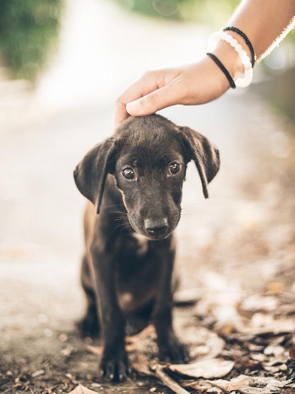 Los animales podrían tener asistencia jurídica gratuita a través de un turno de oficio especial