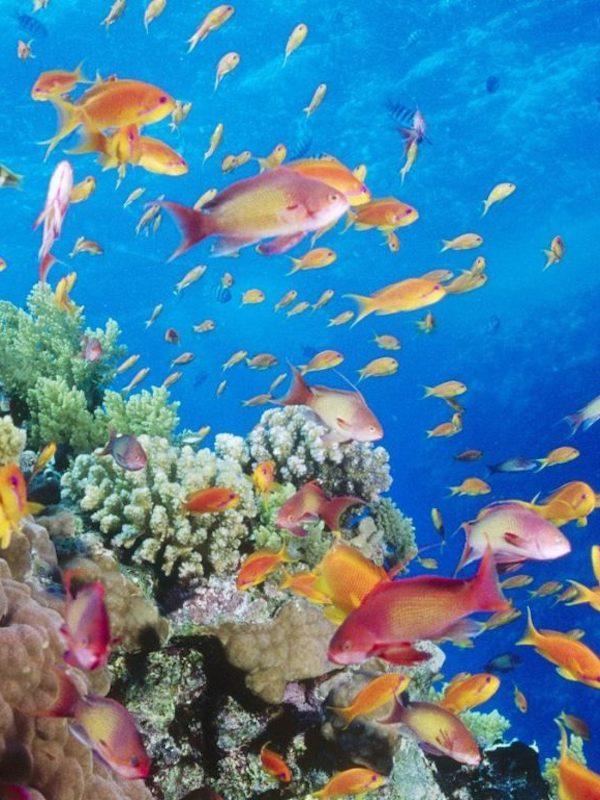Europa impondrá más esfuerzos a los países  la UE para proteger sus ecosistemas marítimos