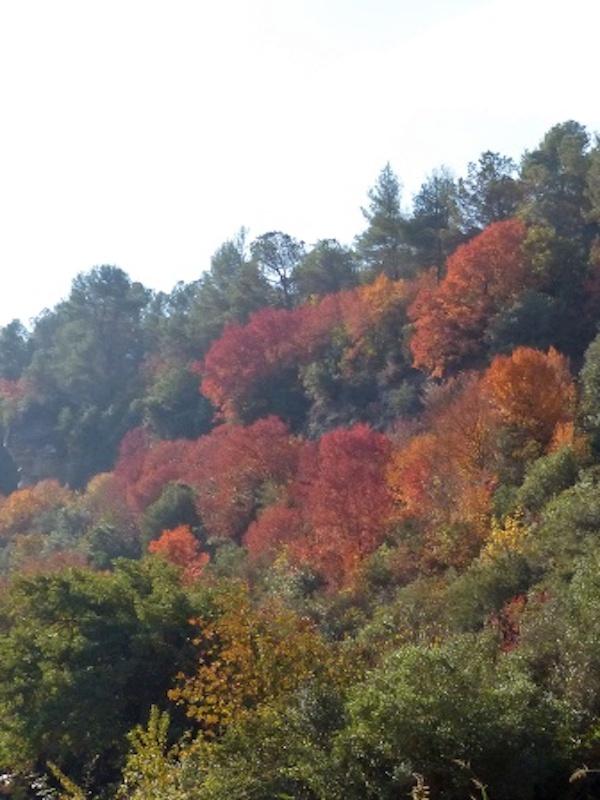 Los pinos rojos cubrían la península desde los Pirineos al Mediterráneo hace 50.000 años