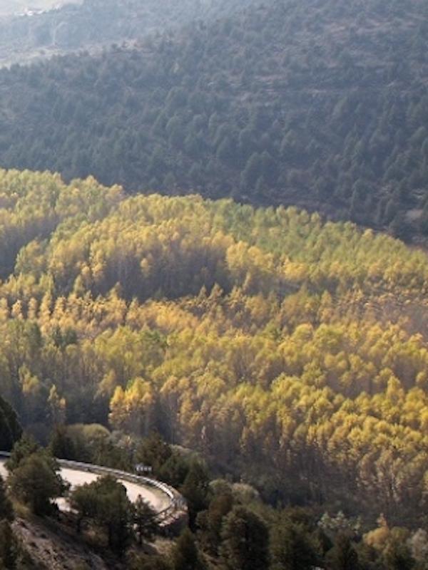 Primer Cinturón Contra El Fuego en el Cañón del Río Lobos