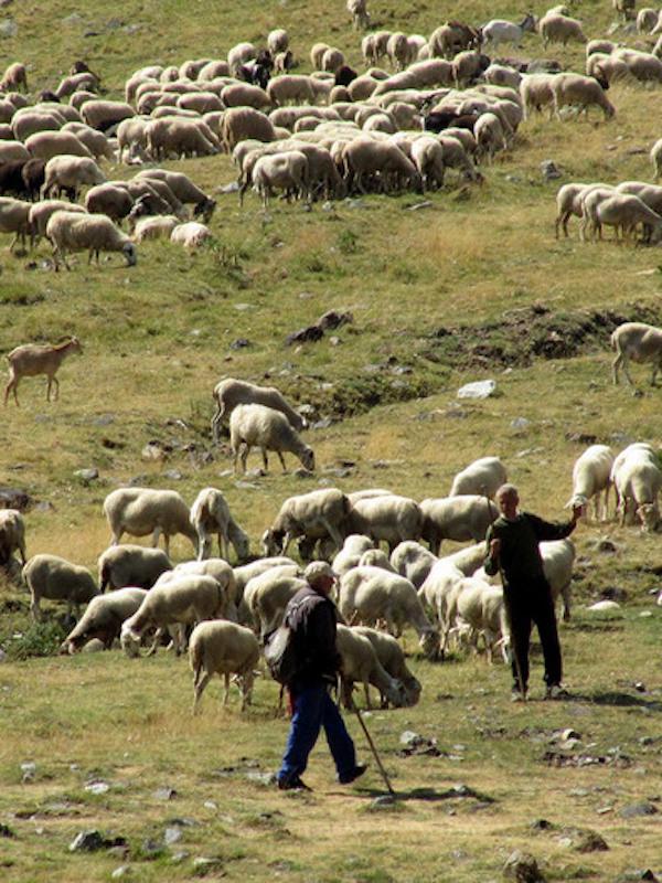 El Plan de Ganadería Extensiva de Andalucía busca la sostenibilidad