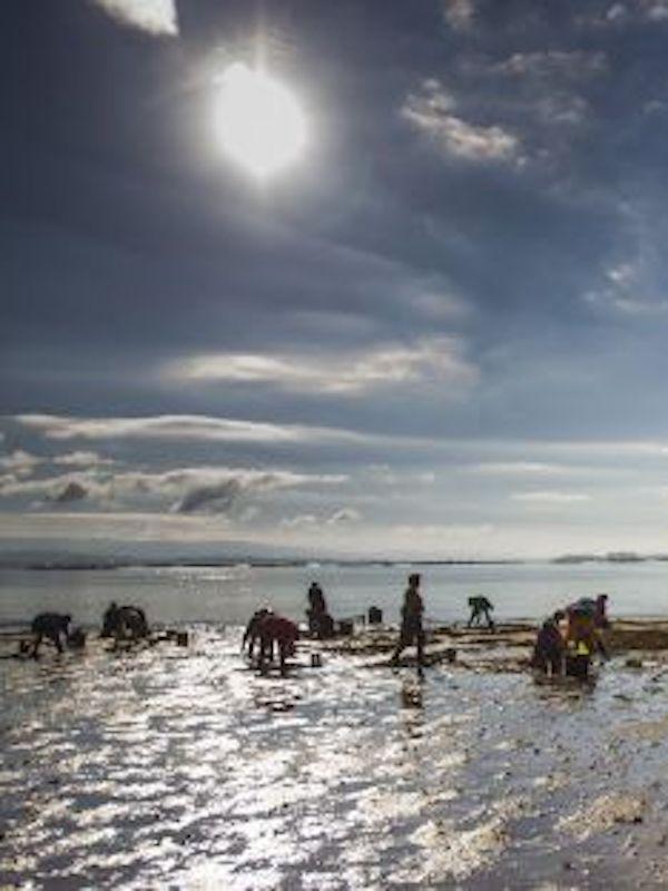Pacto por el Mar Menor recuerda que la extracción de moluscos y crustáceos en el Mar Menor está prohibido