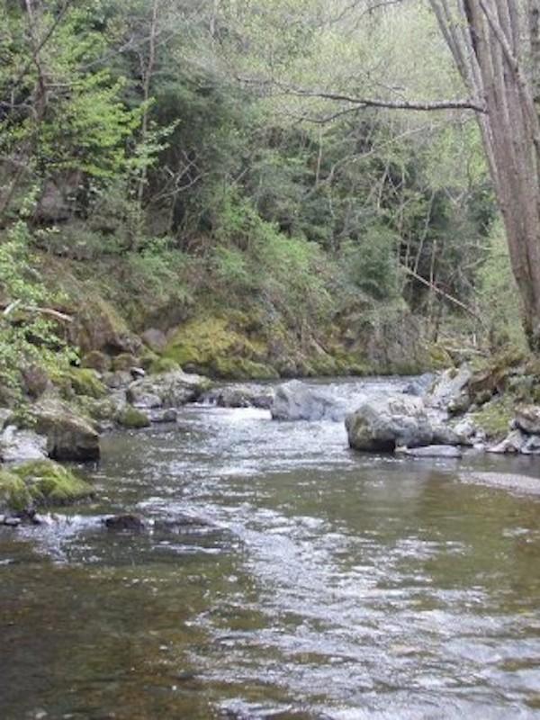 El BNG pedirá en el Parlamento Europeo una auditoría sobre la gestión medioambiental de los ríos gallegos