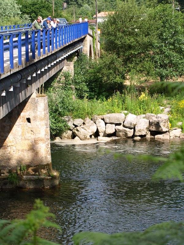 Asturias. Cancelan el disparatado proyecto de la cría de esturiones en el río Piloña