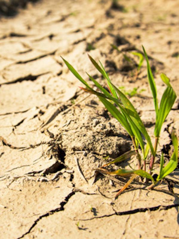 ElPozo se suma a la comunidad #PorElClima para luchar contra el cambio climático